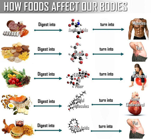 how foods affect our bodies